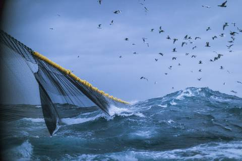 Bullying, harassment rife in commercial fishing industry