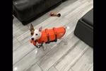 Jack russell Zuko rescued after being spotted off Florida coast